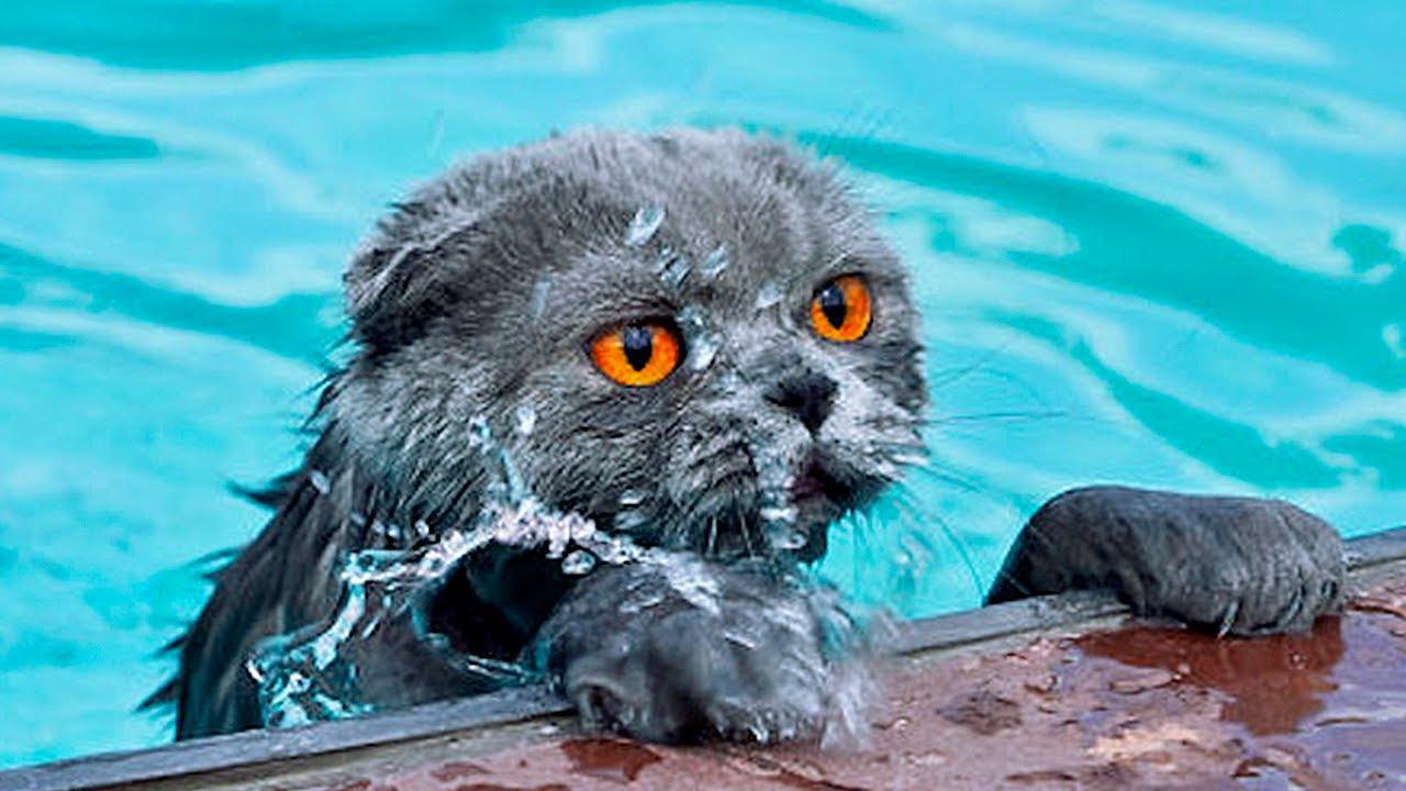 peek a boo kitten